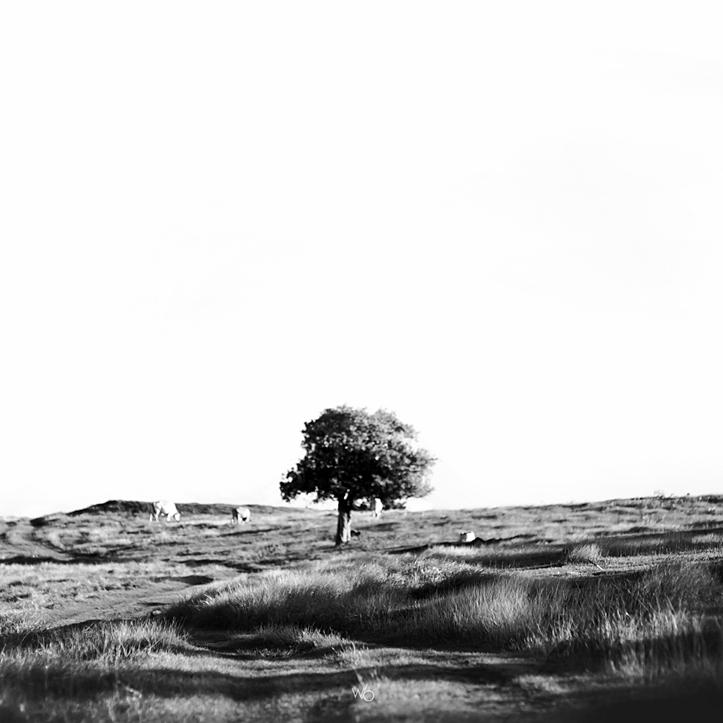 Paysage arbre gosier guadeloupe noir et blanc
